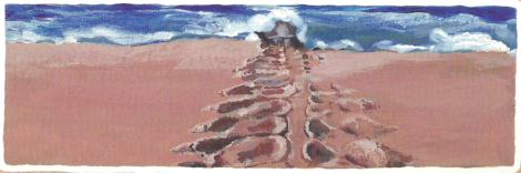 Una piccola grande tartaruga, Nicola Davies - Editoriale Scienza