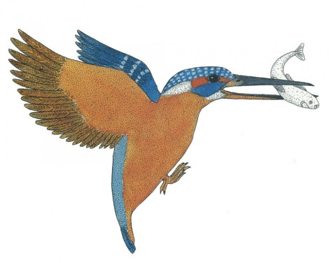 Titolo: Inventario illustrato degli animali Autore: Emmanuelle Tchoukriel, Virginie Aladjidi Editore: Ippocampo