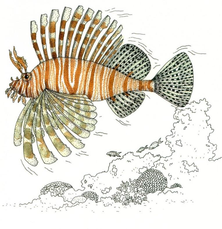 Inventario illustrato del mare, Emmanuelle Tchoukriel e Virginie Aladjidi -Ippocampo