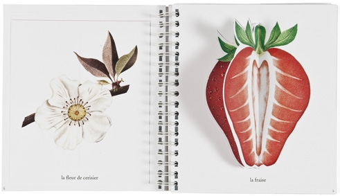 Primavera, estate, autunno, inverno, Pittau&Gervais - Topipittori