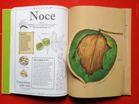 I frutti della terra - Judith Nouvion
