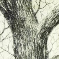L'albero di Anne Frank