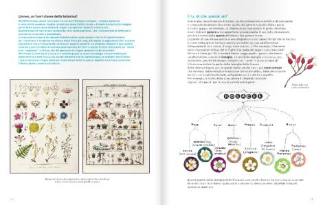 Il mondo segreto delle piante, Jeanne Failevic, Véronique Pellissier, Cécile Gambini - 2014, Editoriale Scienza