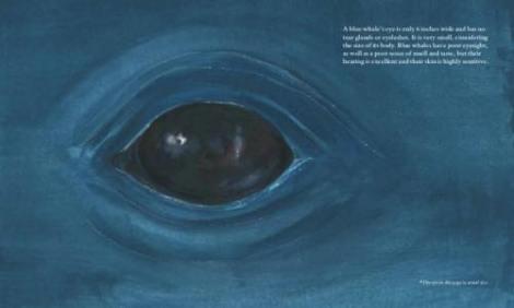 la balenottera azzurra4