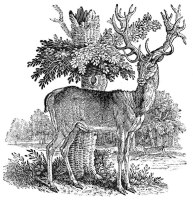 The Fox Hound, A General History of Quadrupeds, Thomas Bewick – credits http://www.bewicksociety.org/galleries/publications/quadrupeds/foxhound800.html