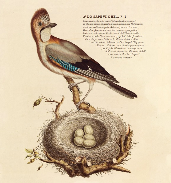 Il grande libro degli uccelli di Bibi Dumon Tak - 2019, Rizzoli